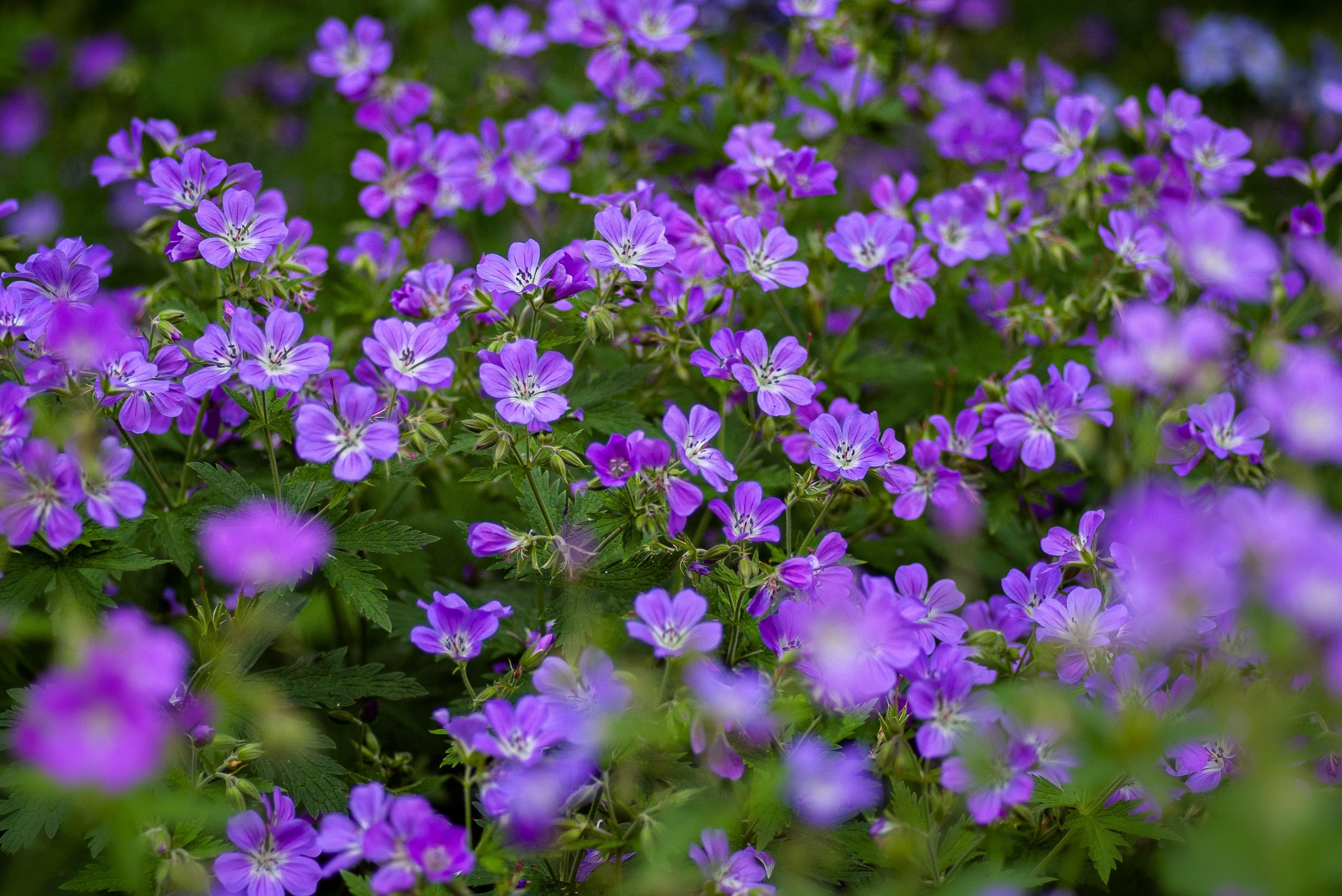 gardens in London garden glowers