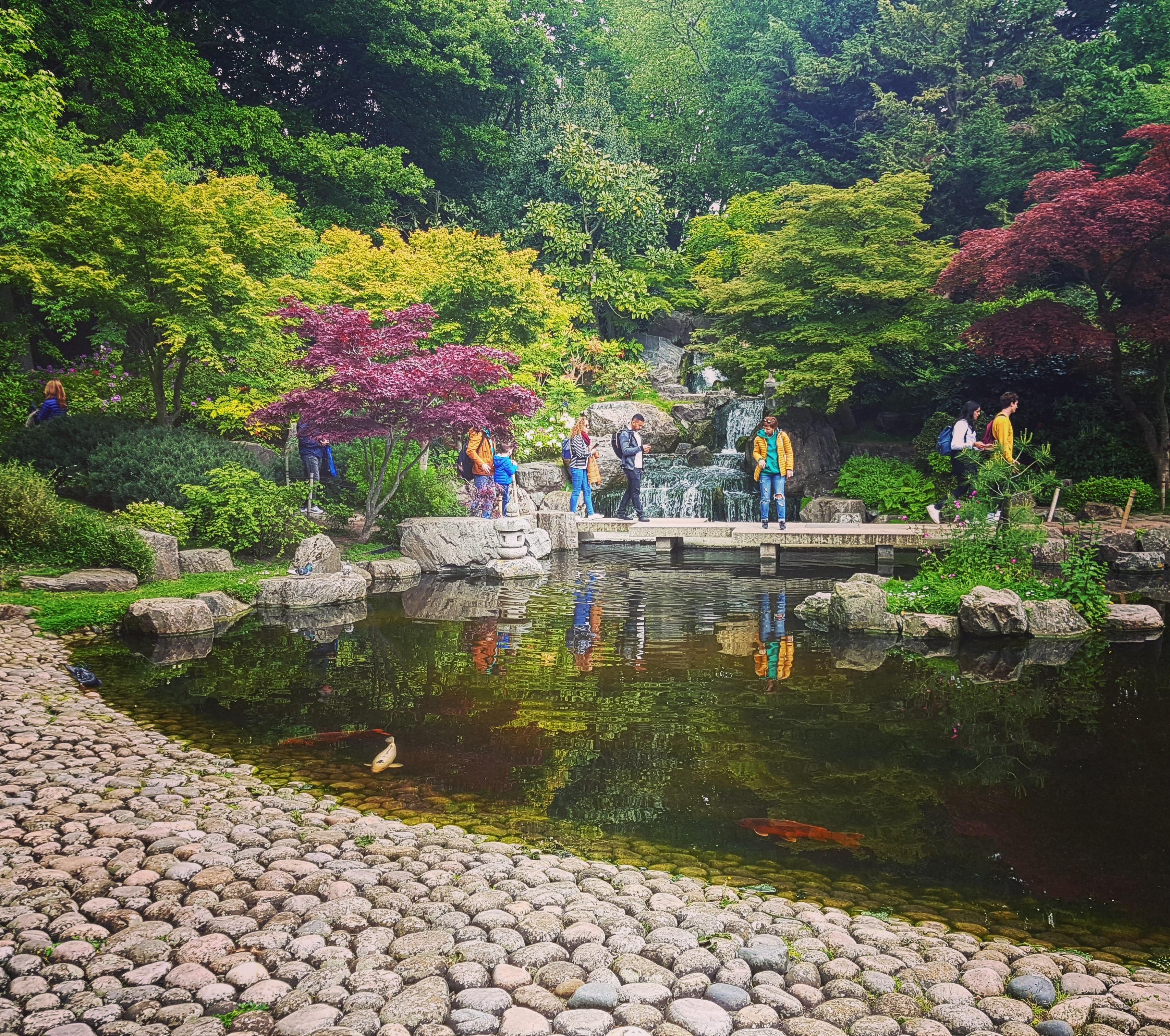 kyoto garden pond